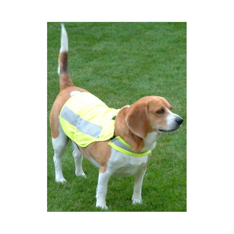 Gilet ajustable haute visibilité pour moyen chien